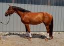 Loreli LBA in  Horses For Sale