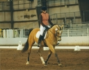 AAH Buck Blue Bonanza in  Horses For Sale
