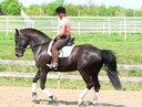 Des My Jordin Tiko in  Horses For Sale