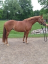 Christina-0 in  Horses For Sale