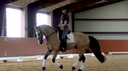Madoc Prince Phillip in  Horses For Sale