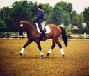 Dona Chanel in  Horses For Sale