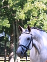 Wonderful Pearle in  Horses For Sale