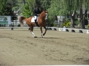 Funtango in  Horses For Sale