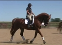 OHD Darius in  Horses For Sale