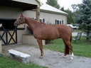 Word of Honour in  Horses For Sale