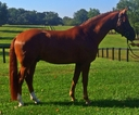 Legende in  Horses For Sale