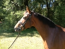 FILLIE in  Horses For Sale