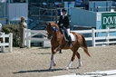 Flash Gordon S E in  Horses For Sale