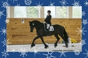 Talisman ISF, Star in  Horses For Sale