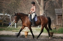 Sidney in  Horses For Sale