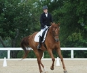 HSA Comet's Magic Man in  Horses For Sale