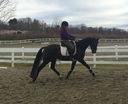 Eazy Boy in  Horses For Sale