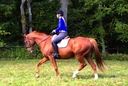 Precision Time in  Horses For Sale
