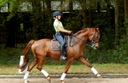 Florentino in  Horses For Sale