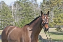 Louie in  Horses For Sale