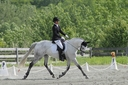 Condition One in  Horses For Sale