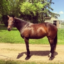 Giselle in  Horses For Sale
