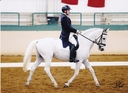 Siglavy Aga in  Horses For Sale