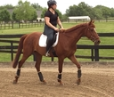 Reminisce  in  Horses For Sale
