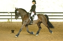 Andreas HP in  Horses For Sale