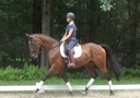 Valonia in  Horses For Sale