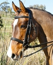Lada'at in  Horses For Sale