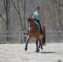 Wilton in  Horses For Sale