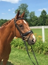 Emerson in  Horses For Sale