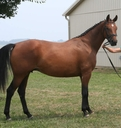 Royal Princess OBX in  Horses For Sale