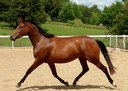 Finesse in  Horses For Sale