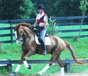 Renaissance Man HVH in  Horses For Sale