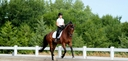 Brementown in  Horses For Sale