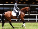 Allegro SRF in  Horses For Sale