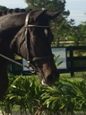 WAKAN in  Horses For Sale