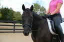 Dior CCF in  Horses For Sale