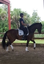 Derrick PQH in  Horses For Sale