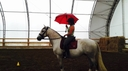 Cassie in  Horses For Sale