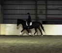 Early Riser in  Horses For Sale