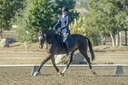 Tropicano JRR in  Horses For Sale