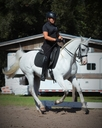Al Marah Silver Charm in  Horses For Sale