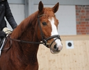 Don Felice in  Horses For Sale