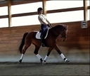 Romance LBA in  Horses For Sale