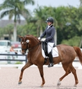 Darcy Diamond in  Horses For Sale