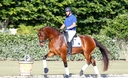 Hermes ISF in  Horses For Sale