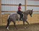 Good Painted Zip in  Horses For Sale