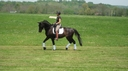 Castielle in  Horses For Sale