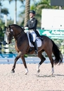 Zon Primaire in  Horses For Sale