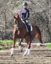 Enferno QF in  Horses For Sale