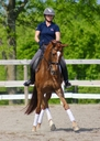 Whizard in  Horses For Sale